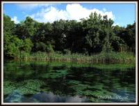 Weeki Wachee River 4