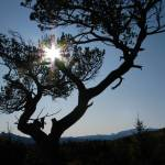 """Sun & Tree ... IMG_2480"" by garytrentPHOTOGRAPHYcdn"