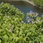 """Rideau Canal"" by mattwilson"