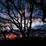 """""""Branches silhouette"""" by MarcoPoggioli"""