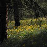 """""""Forest of Wildflowers ... IMG_6047"""" by garytrentPHOTOGRAPHYcdn"""