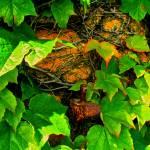 """Ivy"" by skojofoto"