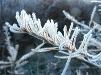 A Cold and Frosty Morning