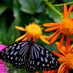 """""""Butterfly Show 25"""" by ChrisThompson"""