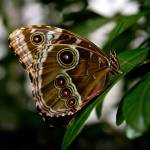 """""""Butterfly Show 17"""" by ChrisThompson"""