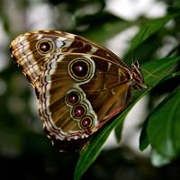 Butterfly Show 17