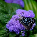 """""""Butterfly Show 15"""" by ChrisThompson"""
