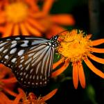 """Butterfly Show 1"" by ChrisThompson"