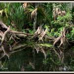 """Cypress Swamp"" by BABowenphotography"