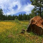 """Springtime In Lassen County"" by jameseddy"