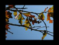 Fall Leaves - Photographer Lisa Espy