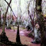 """Cypress Swamp"" by VirginiaZuelsdorf"