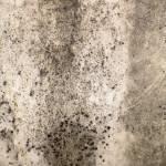 """""""Stone Texture"""" by kreicher"""