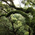"""Tree Drama"" by Groecar"