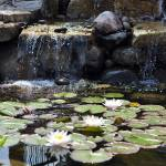 """Waterfall Pond"" by seeitpictures"