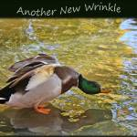 """Another New Wrinkle"" by GlendaBorchelt"