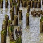 """Pilings West Side NYC"" by joegemignani"