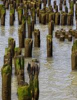 Pilings West Side NYC