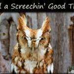 """A Screechin"