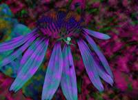 Abstract Coneflower and Spider