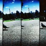 """""""Zona_Lomo_0328"""" by Zona311"""