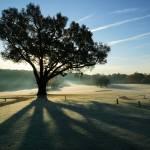 """""""Turkey Oak in Autumn"""" by JohnGaffen"""