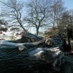 """Winter frost on the Old Turkey Oak"" by JohnGaffen"