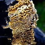 """Tree Fungi"" by JohnGaffen"
