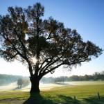 """Winter Sun at the Turkey Oak"" by JohnGaffen"