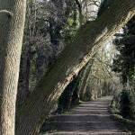 """""""Walking in Summerhouse Hill Wood"""" by JohnGaffen"""