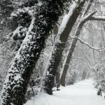 """Summerhouse Hill Wood under snow"" by JohnGaffen"