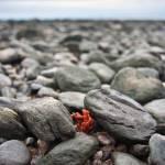 """""""Red in Rocks"""" by stevewalterphoto"""