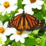 """8-12-06 Butterflys 074"" by kcmodb"