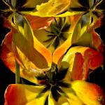 """""""Dying Tulip Tangle with Fly"""" by ChrisLord"""