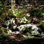 """Abundance of Fauna"" by xhandi"