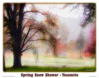 Yosemite - Spring Snow Shower
