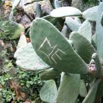 """Carving on Barcelona Cactus"" by PFISTERDIANE"