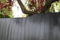 London fence accommodating tree