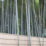"""Bamboo holding back Bamboo, with escaping Bamboo"" by PFISTERDIANE"