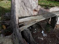 Wooden Bench in Live Tree