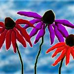 """echinacea"" by jwilliamd"