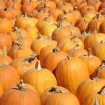"""Pumpkins - Vertical"" by bspringer"
