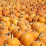 """Pumpkins - Horizontal"" by bspringer"