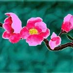"""""""quince blossoms"""" by jwilliamd"""