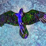 """""""Raven Paint"""" by paulhood"""