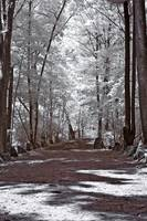 Infrared Pathway
