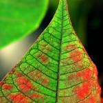 """green red leaf"" by VivianGerogianni"