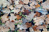 Autumn Abstract