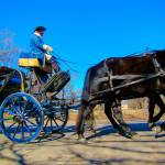 """""""Colonia Williamsburg VA Carriage 5798"""" by JTPatterson"""