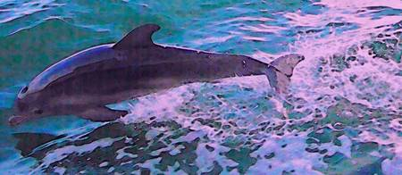 Dolphin's Flight 2